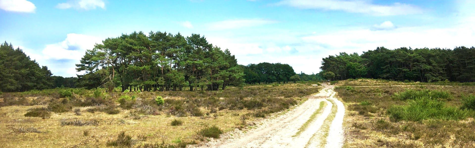 Nederland | De grote stille heide van het Gooi
