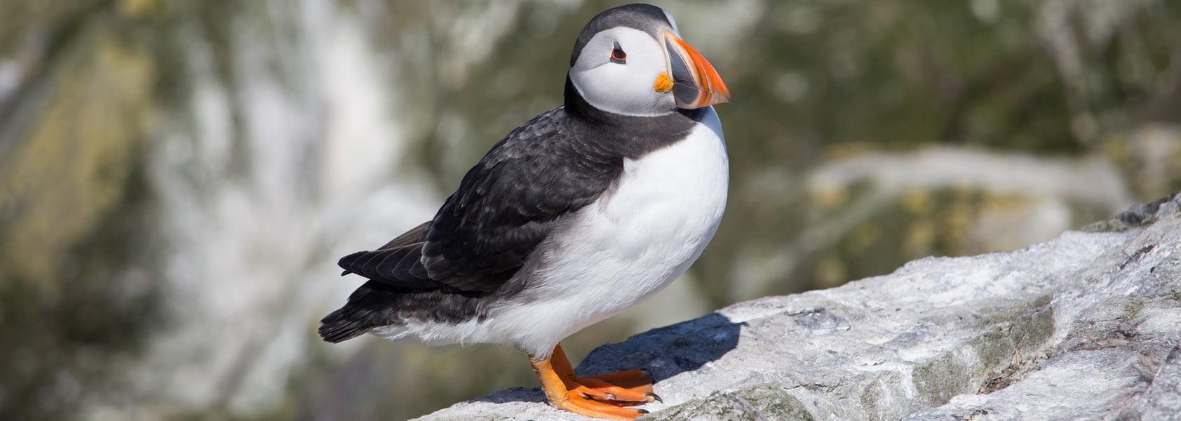 Groepsreis Engeland | Vogelreis in Northumberland